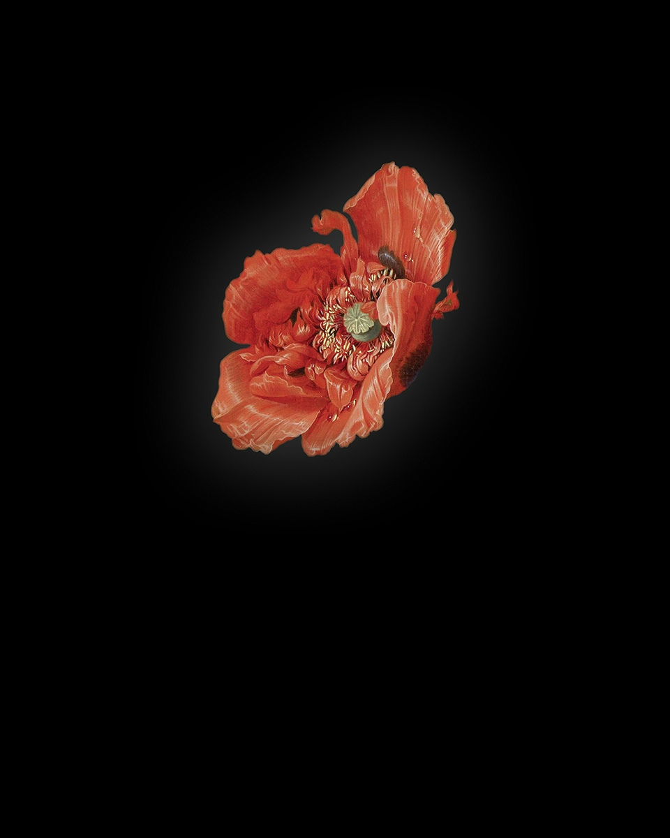 Rob and Nick Carter - RN941, Poppy I after Abraham Mignon, 2013 · © Copyright 2020