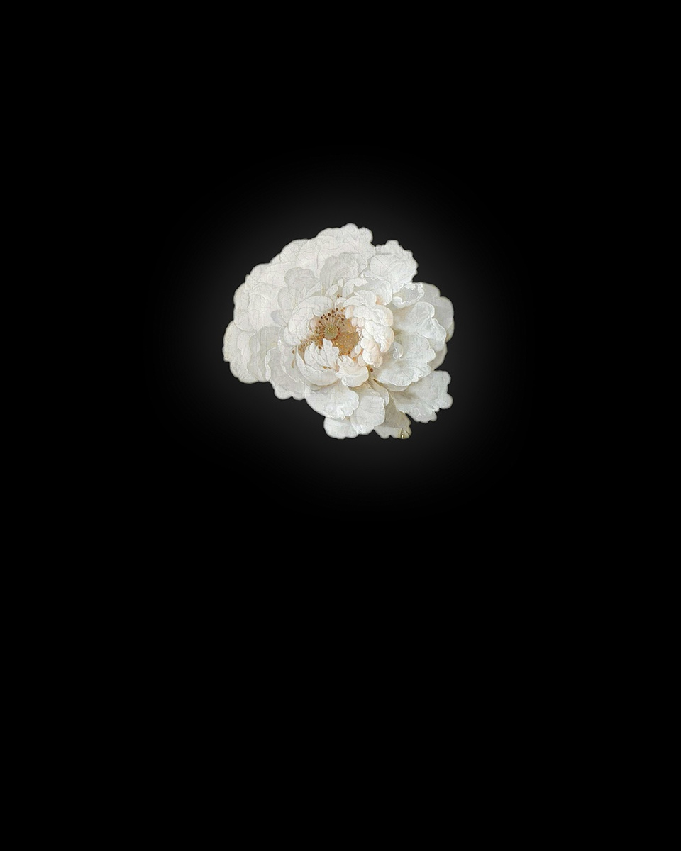 Rob and Nick Carter - RN942, Peony III after Abraham Mignon, 2013 · © Copyright 2019
