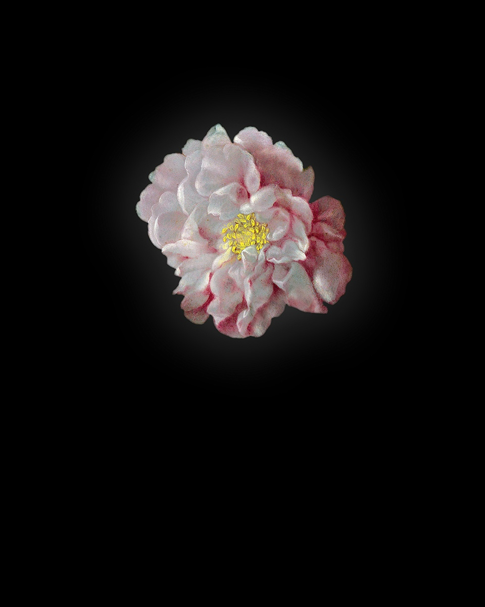 Rob and Nick Carter - RN933, Peony I after Ambrosius Bosschaert the Elder, 2013 · © Copyright 2019