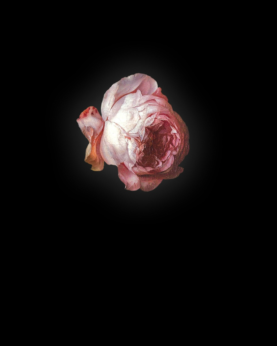 Rob and Nick Carter - RN940, Rose I after Rachel Ruysch, 2013 · © Copyright 2020